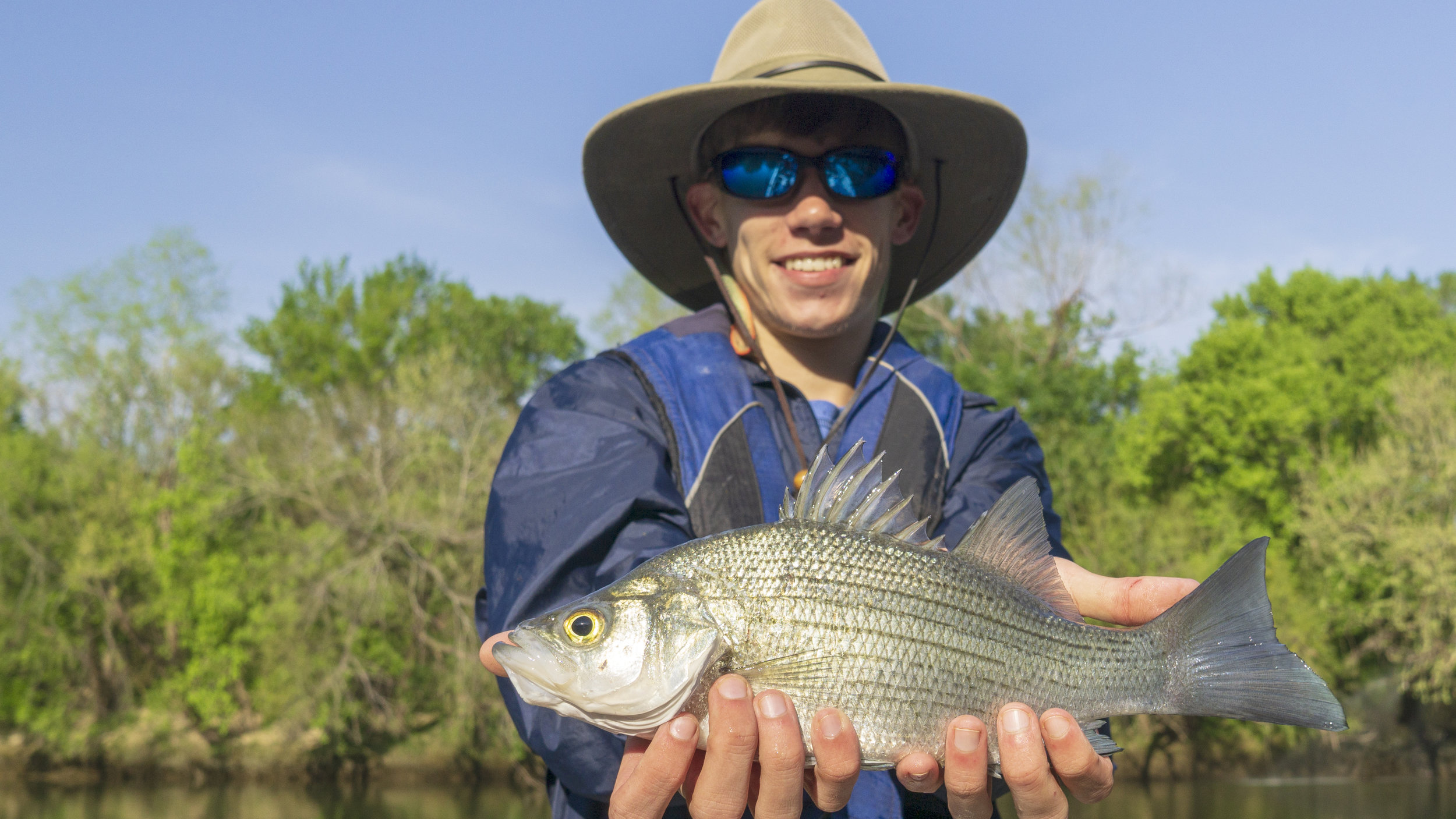 Colorado River white bass