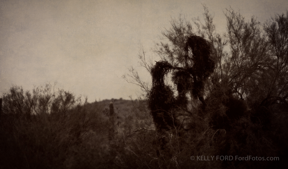 Two in the Bush  taken along highway 87 in Arizona. Copyright Kelly Ford