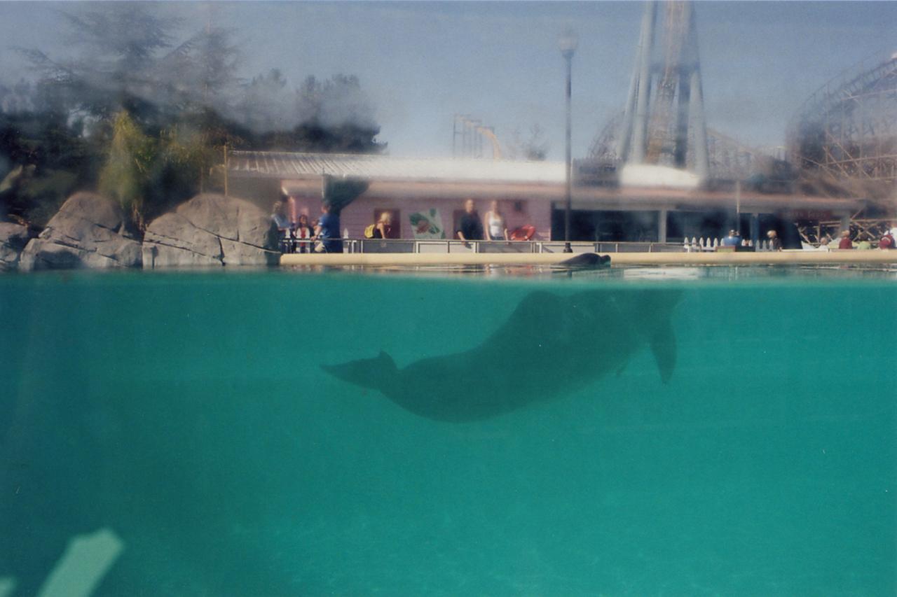 8_The Dolphin Exhibit.jpg
