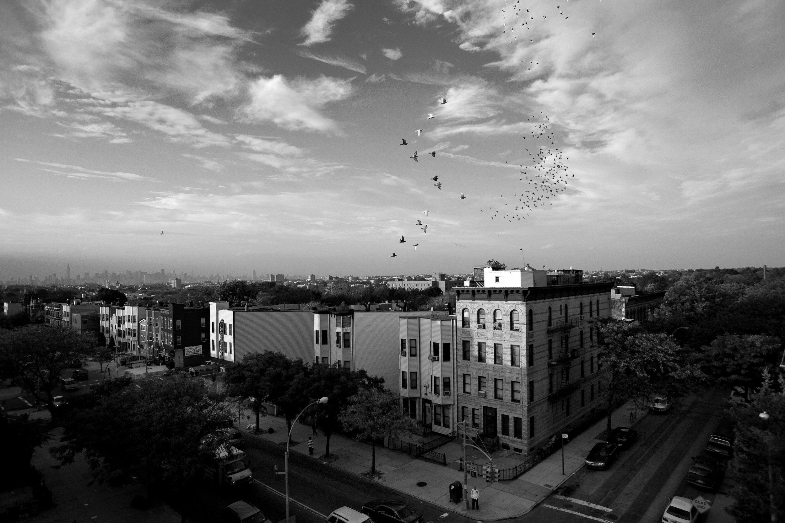 pigeon007.jpg