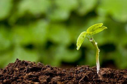 sprout.orig.jpg
