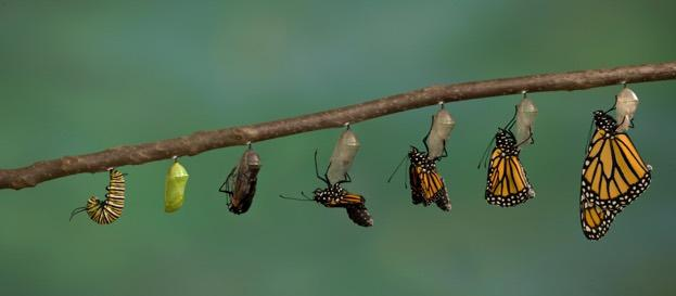 monarchemerging