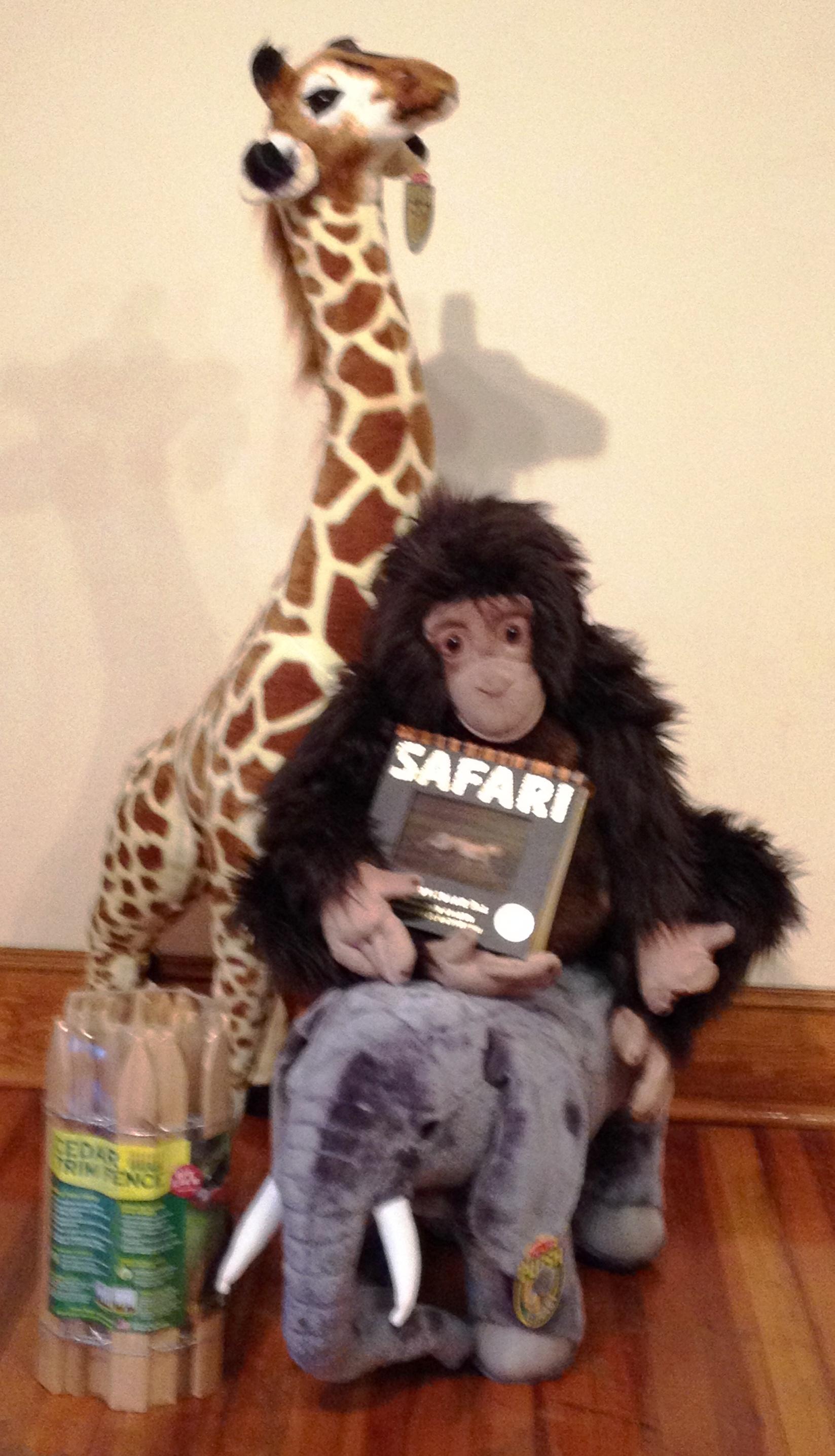 #1 Safari Friends 1