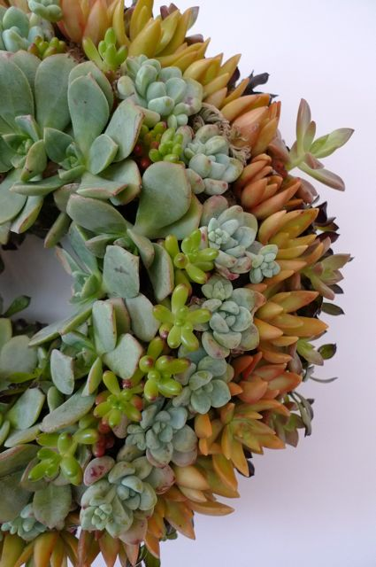 succulent-wreath1