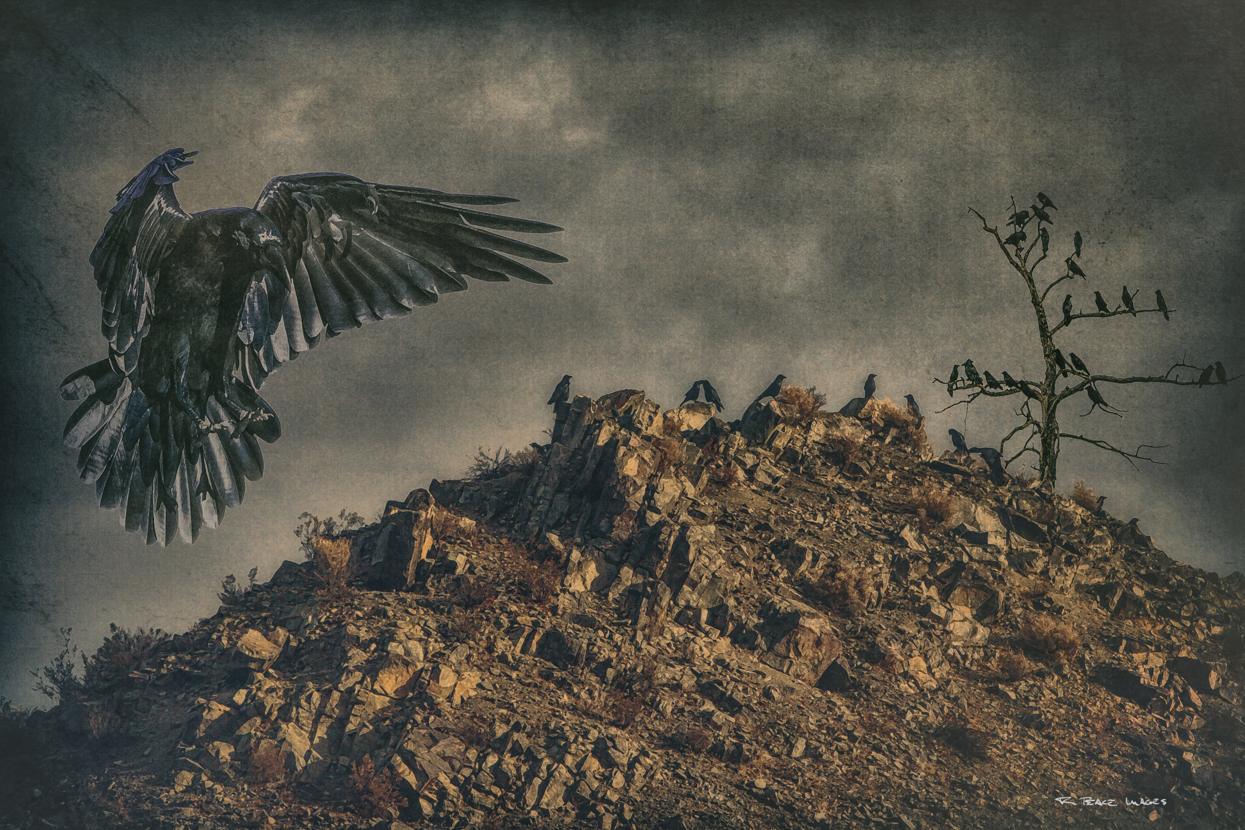 """Raven Hill"" a more ominous composite of ravens."