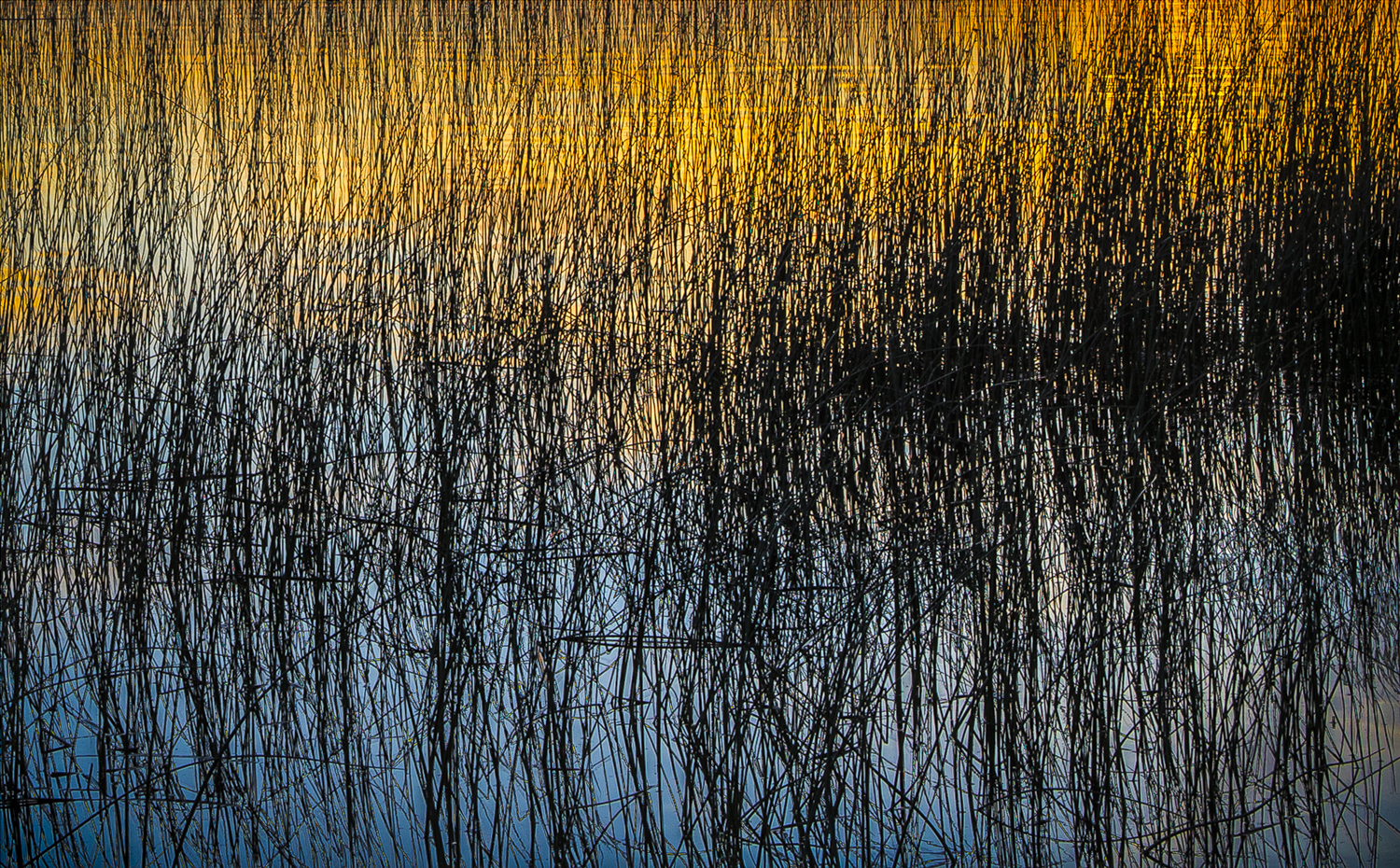 Mixed media ads a more organic feel to this abstract of reeds at sunset. Photo and acrylic paint