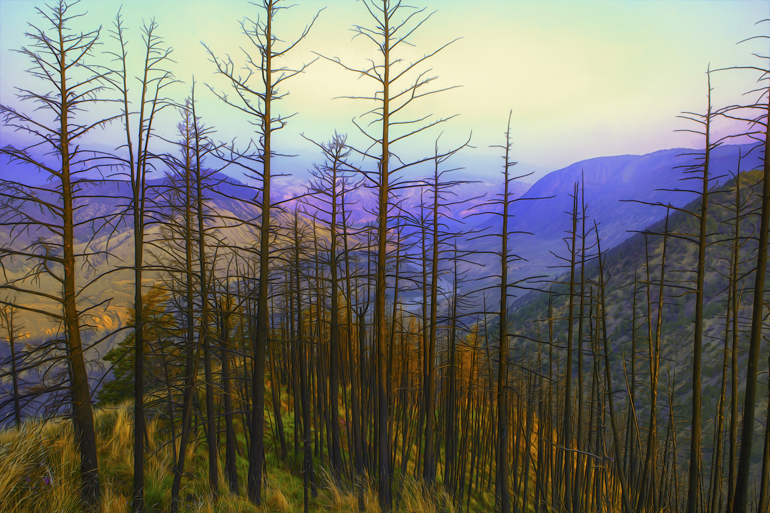 The Fraser River in the back ground of this burned off forest makes for an interesting graphic in this oversaturated image
