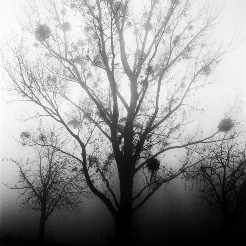 lensblr-network :     mist. Vienna 2012. Yashica Mat 124.   photo  ©Cornelia Reidinger   ( corneliareidinger.tumblr.com )