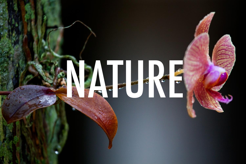 11-Orchid-Rain-Drops.jpg