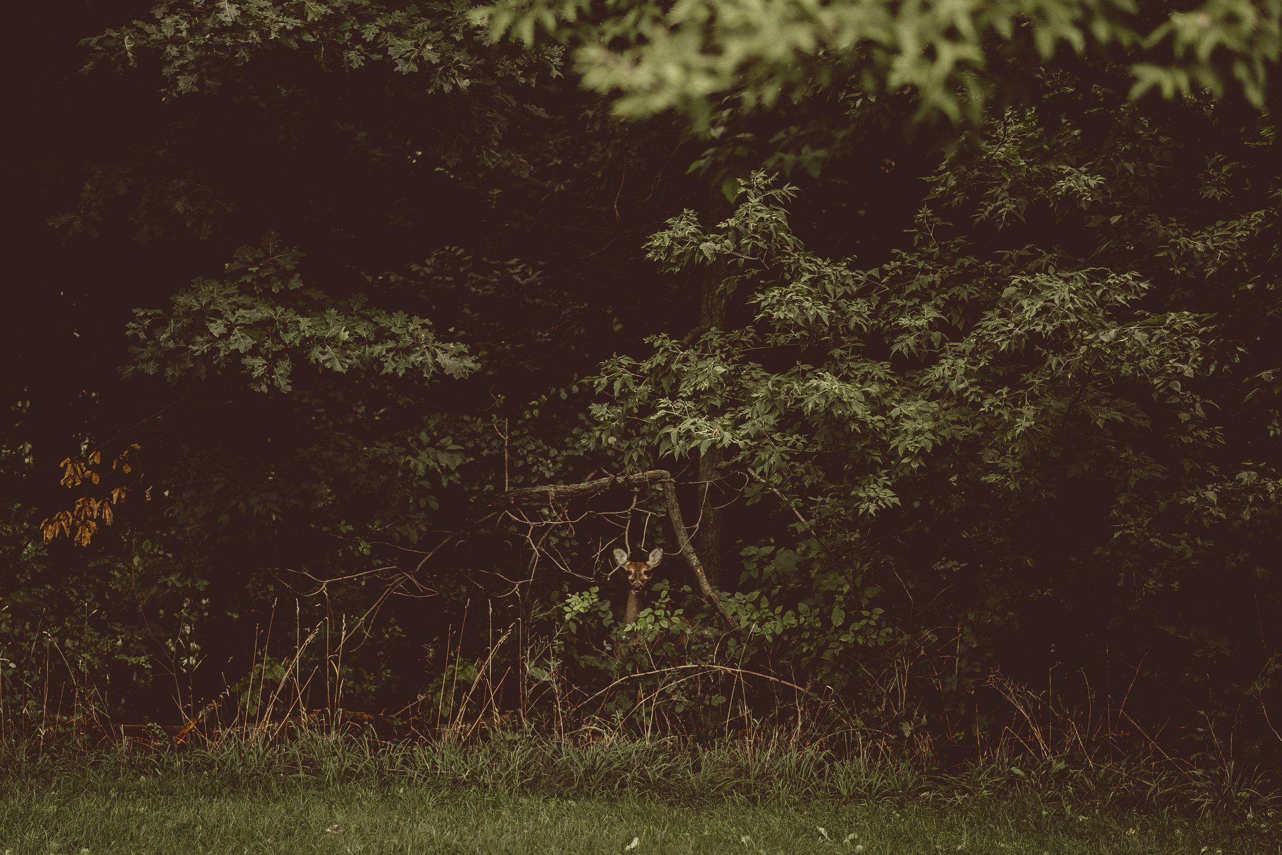 HeidiandDrewWedding-20160917-15-00-18.jpg