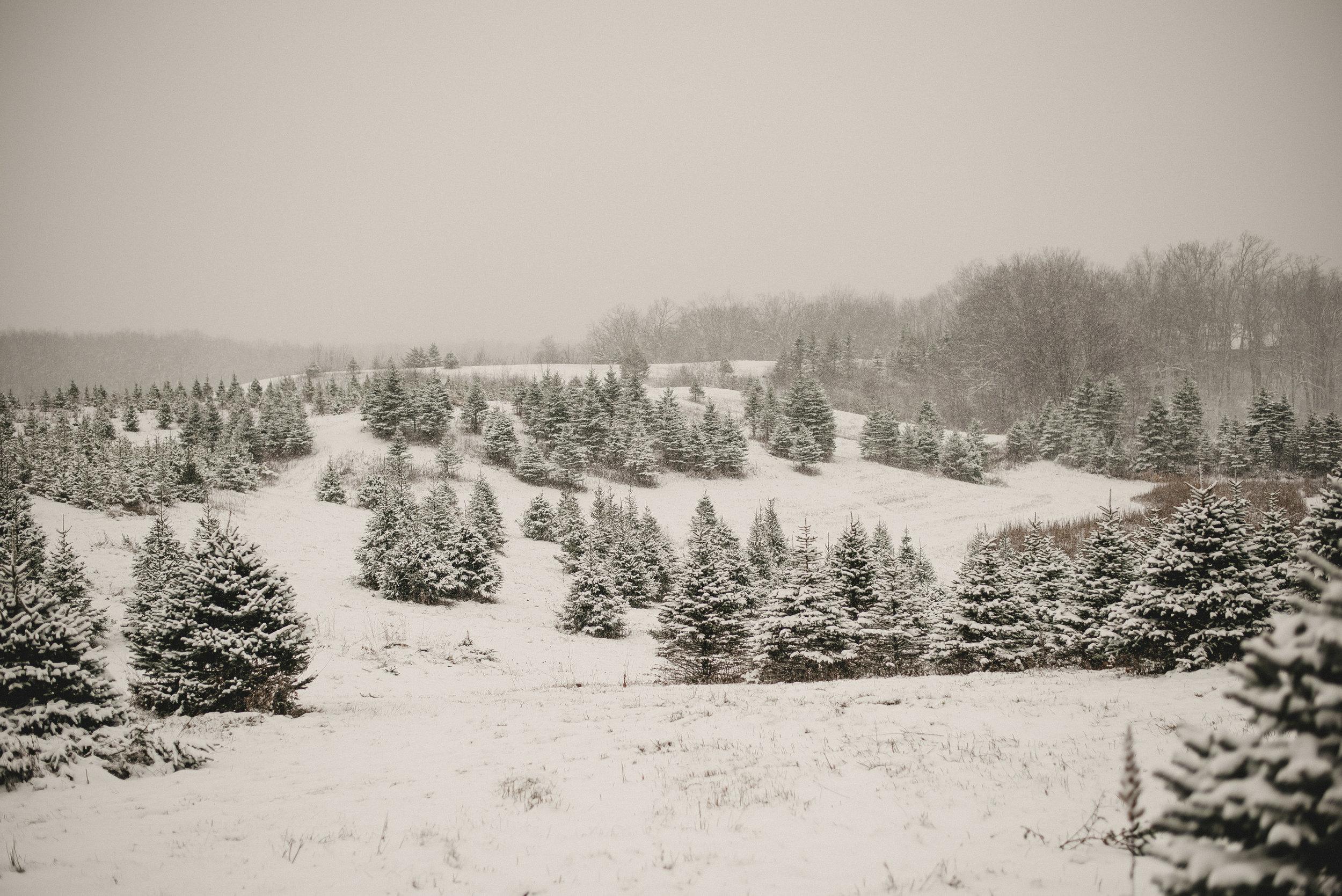 Christmas Tree Farm Family Photo Session Metamora Michigan Winter (3).JPG