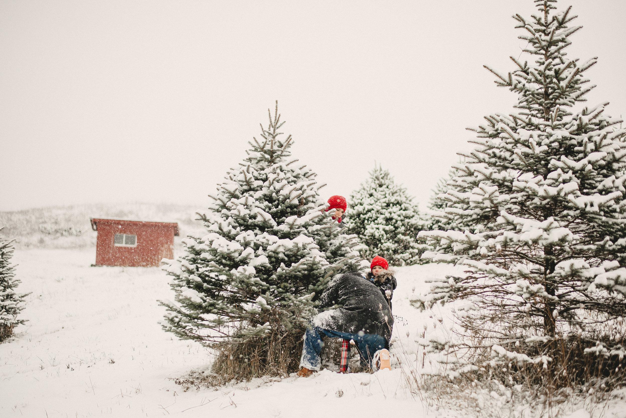 Christmas Tree Farm Family Photo Session Metamora Michigan Winter (10).JPG
