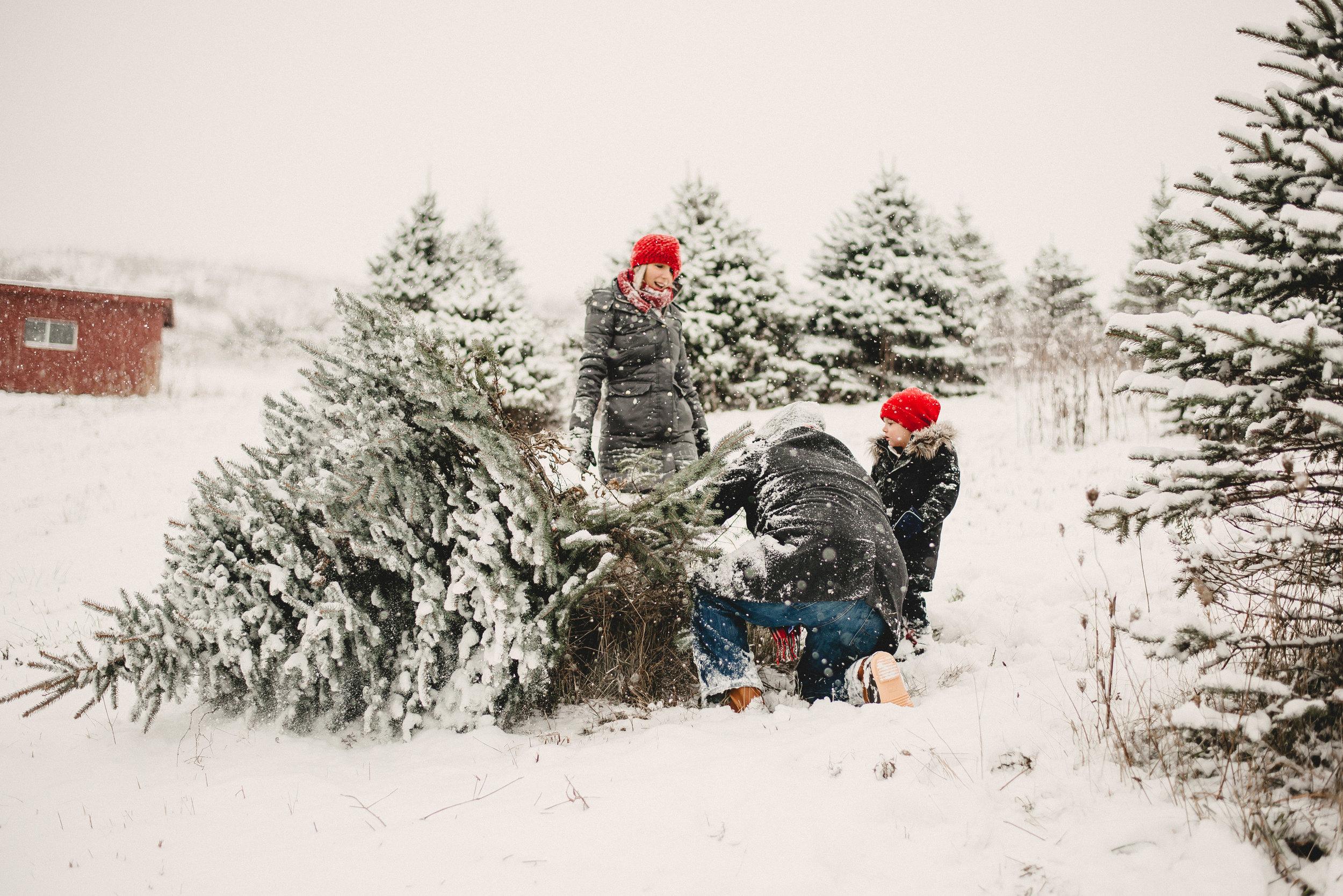 Christmas Tree Farm Family Photo Session Metamora Michigan Winter (12).JPG