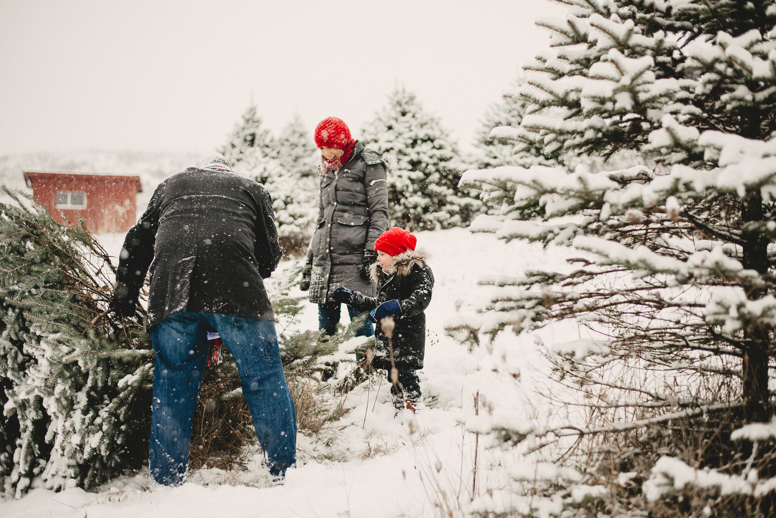 Christmas Tree Farm Family Photo Session Metamora Michigan Winter (14).JPG
