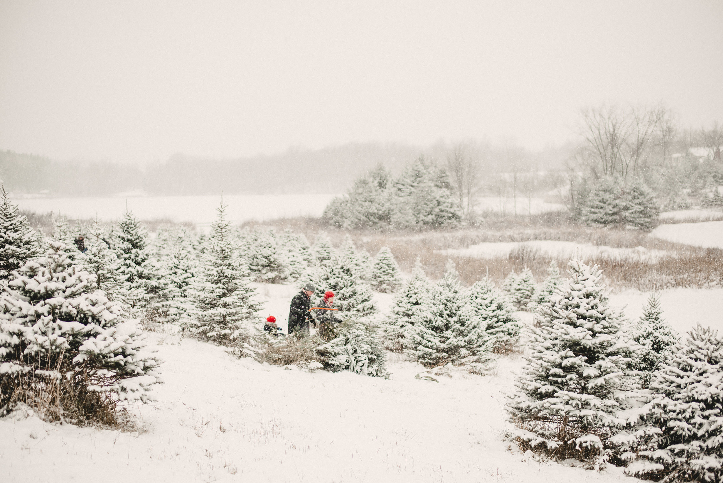 Christmas Tree Farm Family Photo Session Metamora Michigan Winter (16).JPG