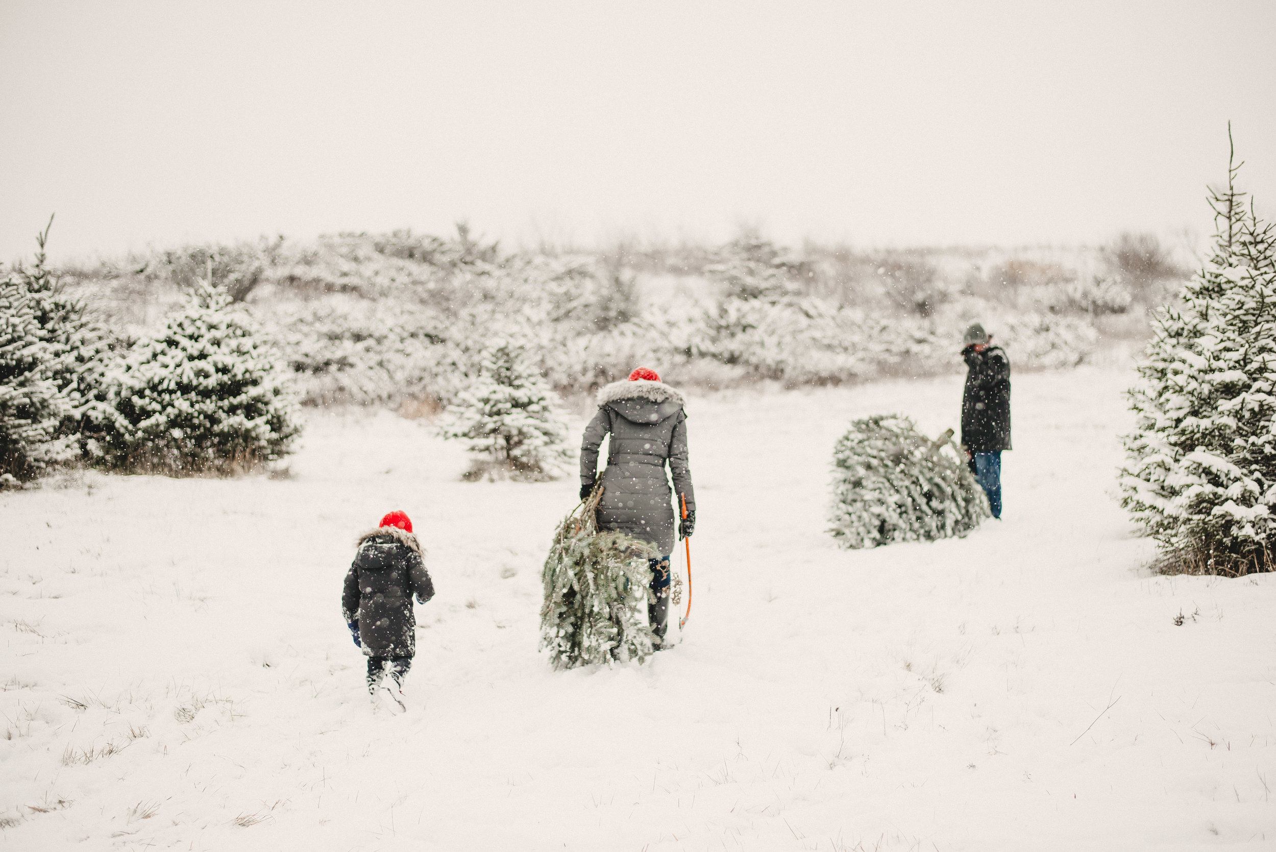 Christmas Tree Farm Family Photo Session Metamora Michigan Winter (26).JPG