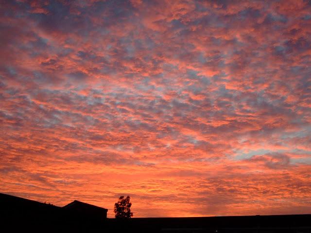sunset+from+garden+1.JPG