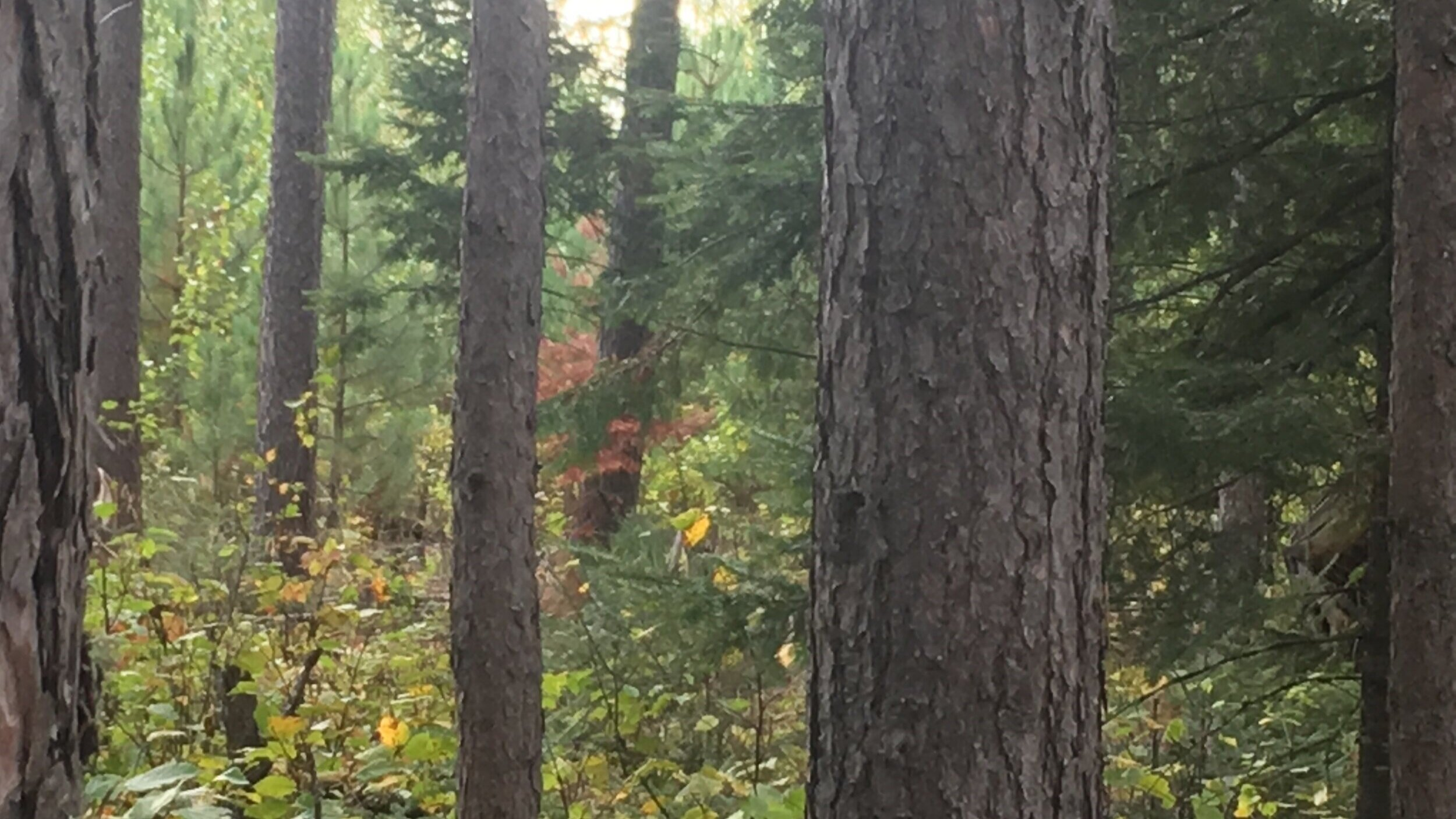 Each generation of ministry is seen in the trees of God's great Northwoods.