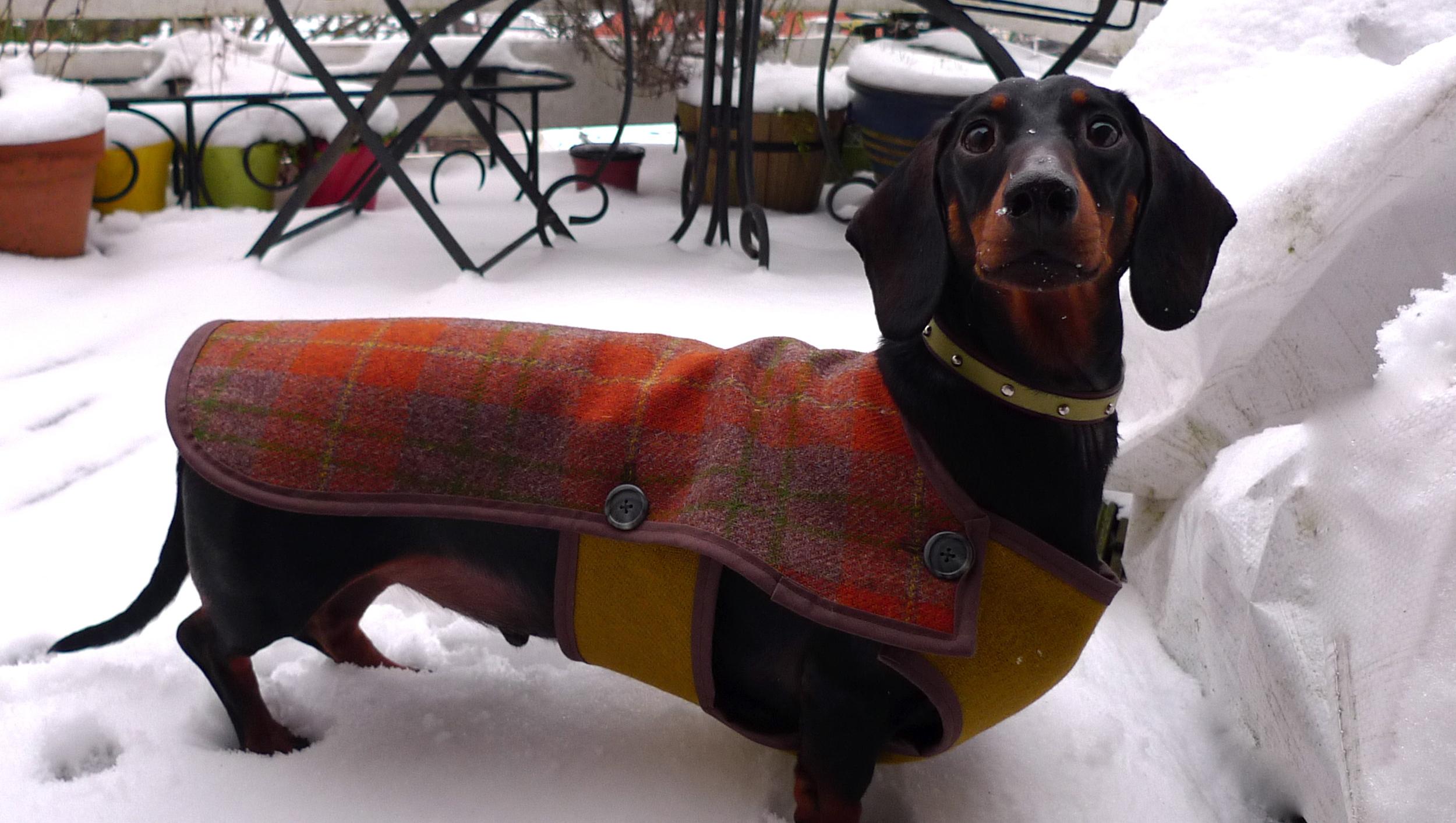 Nando modelling his 'waistcoat' dog coat