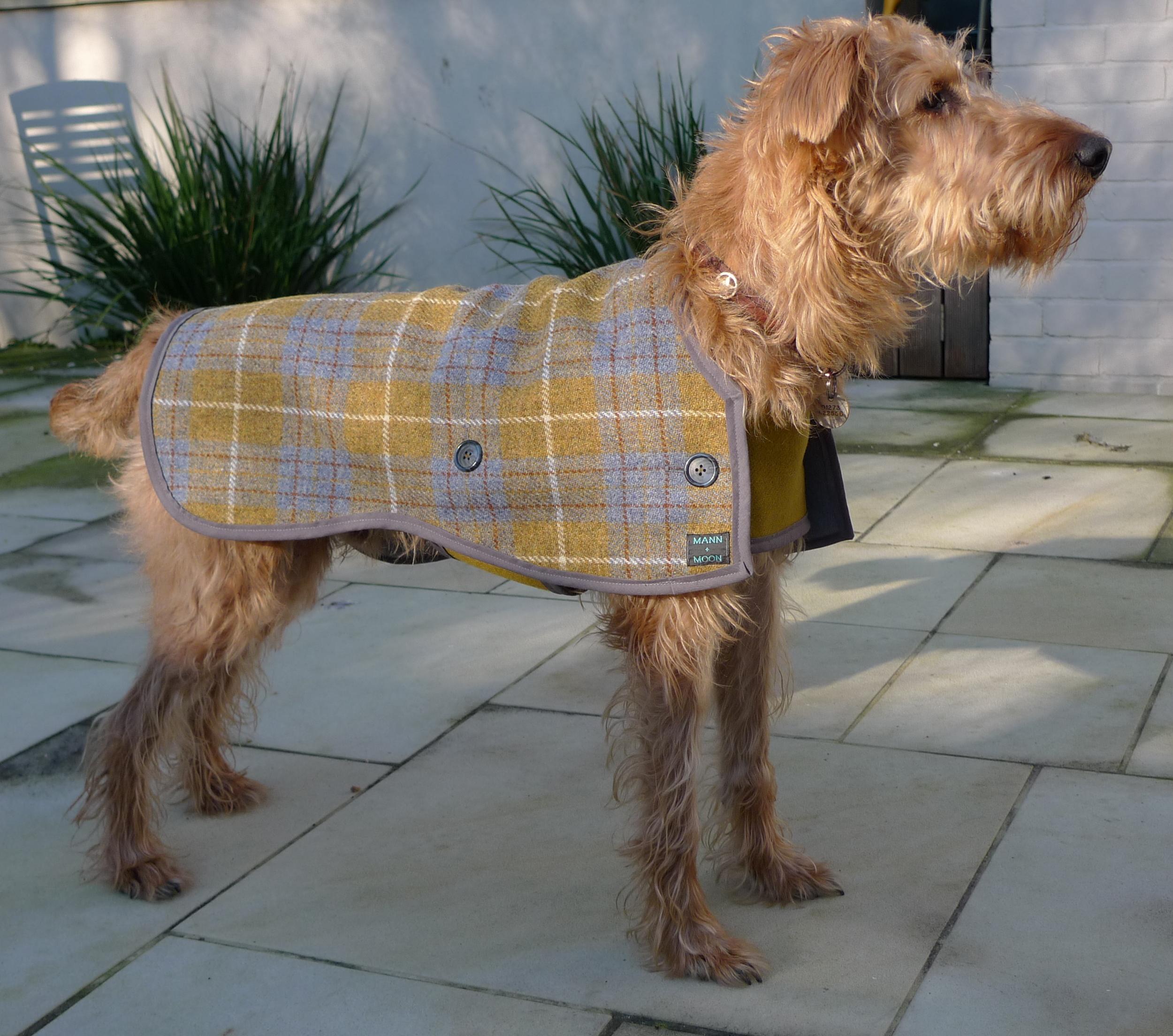 Seamus' perfect posture in his Harris Tweed 2-strap design dog coat
