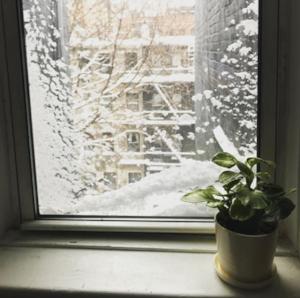 Snow dayyyy