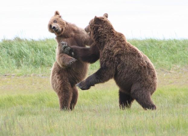 brown-bear2
