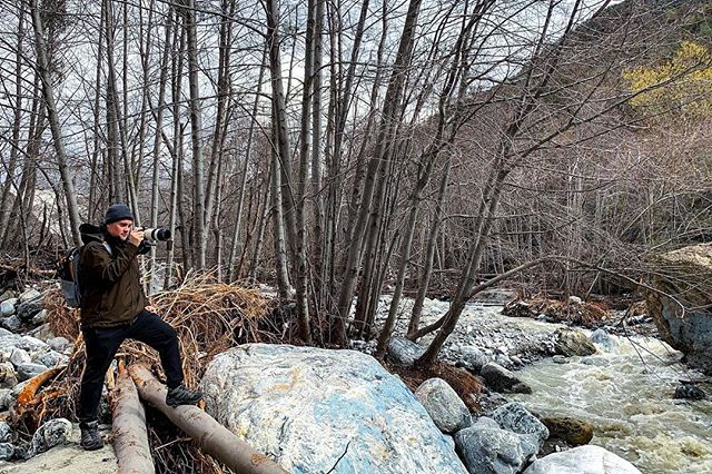Photographer captured in rare photo wild in nature! 📸 @iamnotmyown