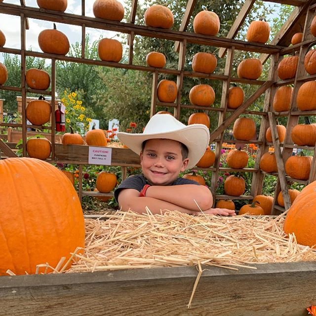 Kicked off Fall by going to Live Oak Canyon pumpkin patch. Shot some tiny pumpkins 🎃 out of a canyon (last video), got lost in a corn maze for over an hour (see stories), fired a paintball gun and picked out some cool pumpkins. Hello Fall! #liveoakcanyon #liveoakcanyonpumpkinpatch #fall