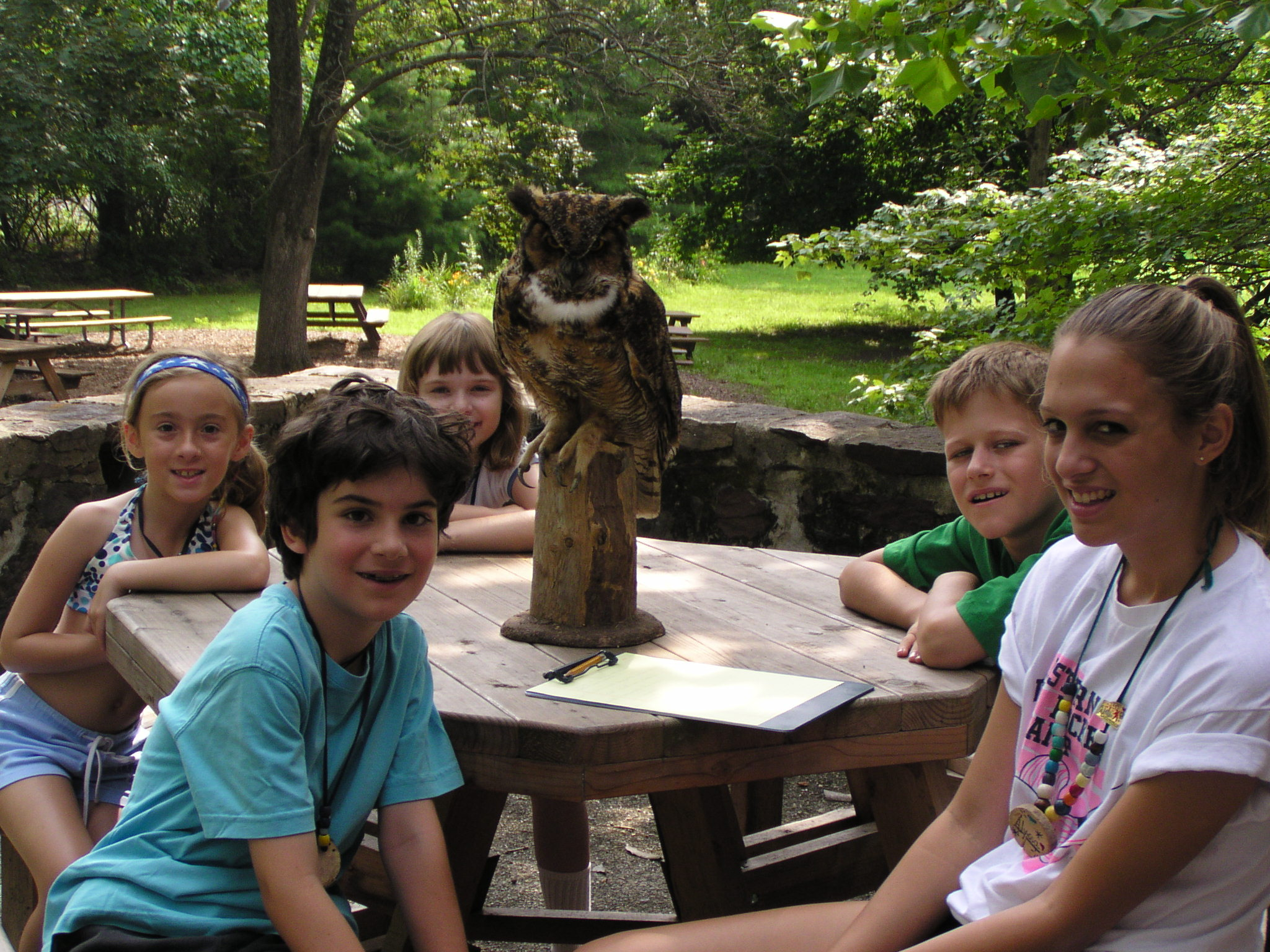 Great Horned Owl Group.jpg