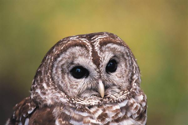 owl face.jpg