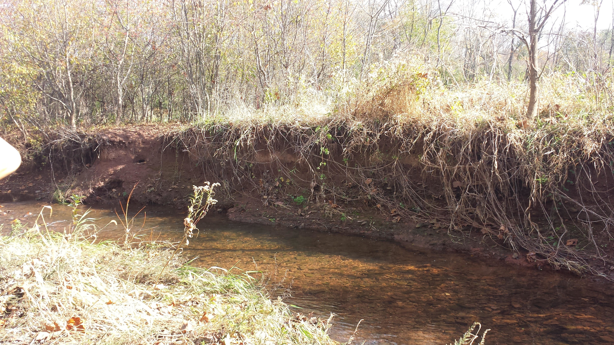 Eroded streambank along the West Branch of the Skippack Creek without a riparian buffer in place.