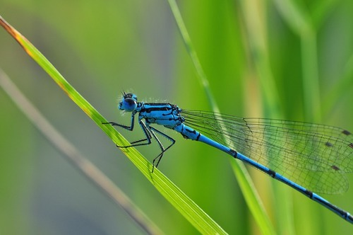 dragonfly-540839_640.jpg