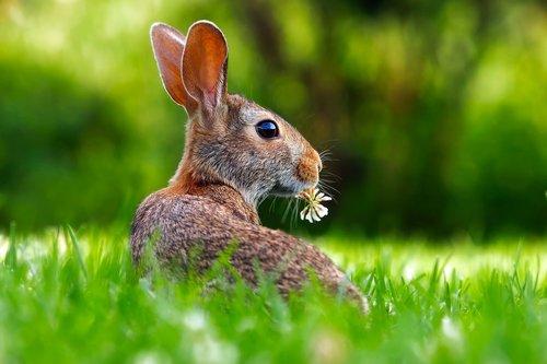 rabbit-1903016_1920.jpg