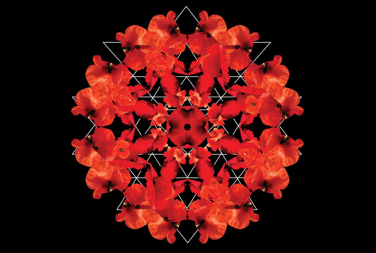 poppies_lines.jpg