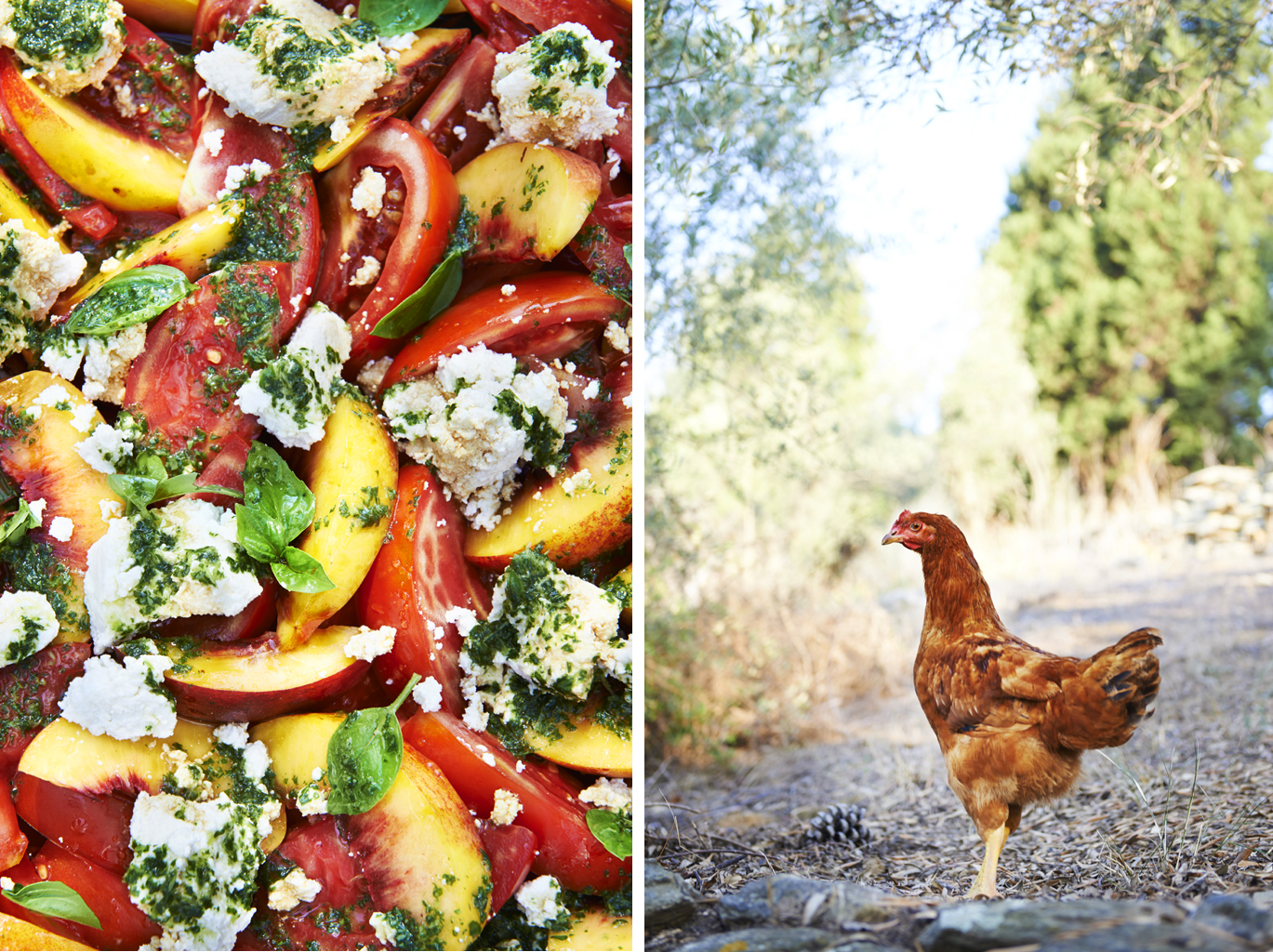 Tomato tomatoes nectarine feta basil salad oil olive close up cook book silver island cookbook recipe chicken free range retreat rustic pine cone retreat greece travel london food photography photographer still life travelling
