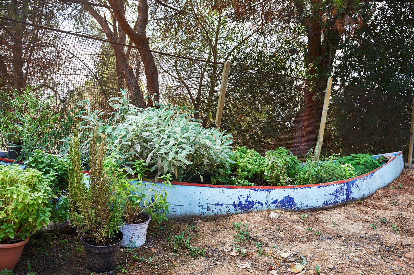 Herbs Ahoy. Corne & Lissa have a small garden in addition to a vast selection of herbs they grow in an old Canoe.