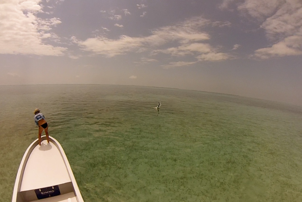 Jumped some nice tarpon this year fishing with  www.belizefly.com