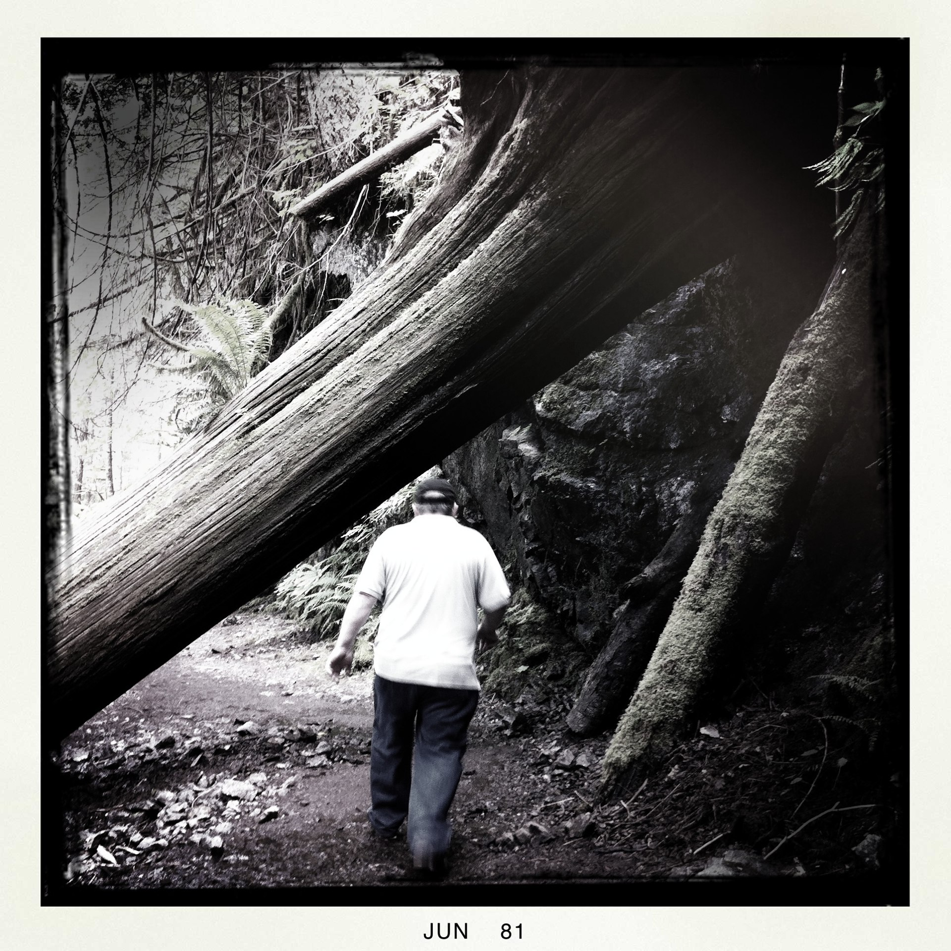 Loved this old tree stretched over the path, my dad looks so tiny compared to it.