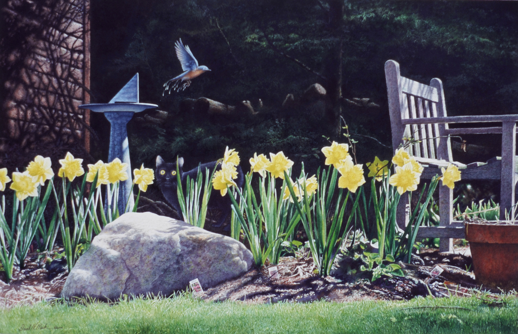 Sea of Daffodils