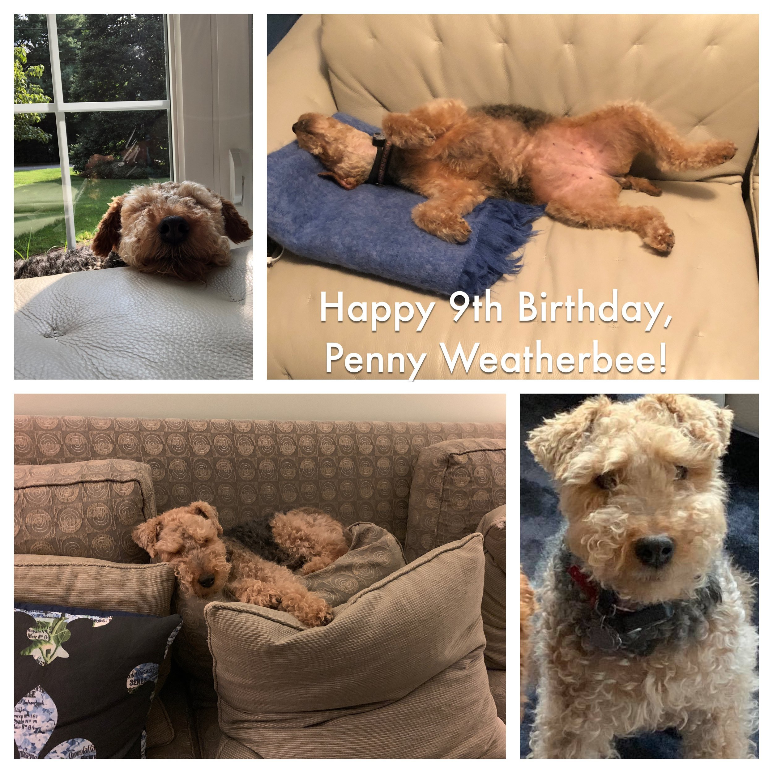 Love our Penny -