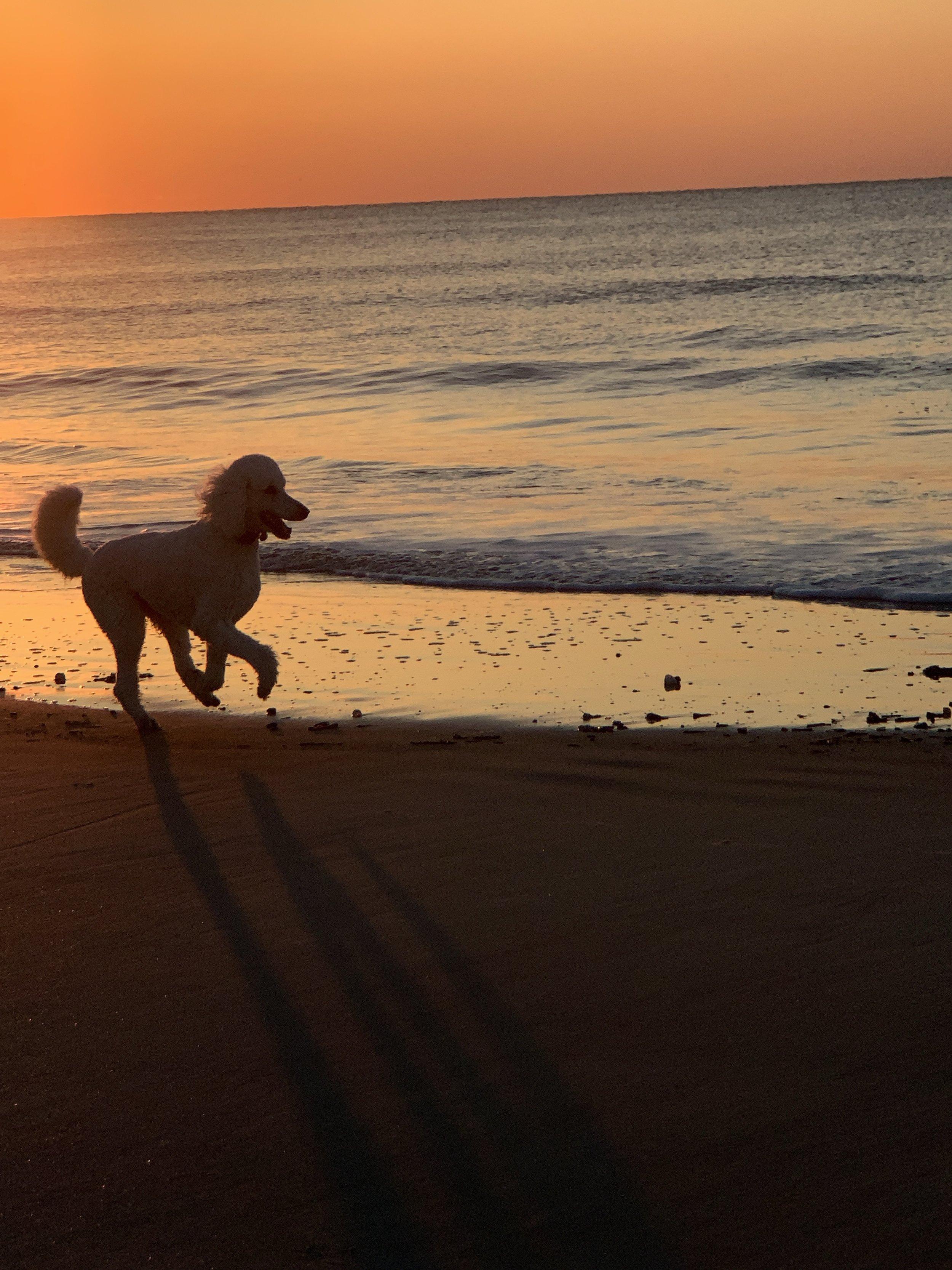 Galloping puppy -