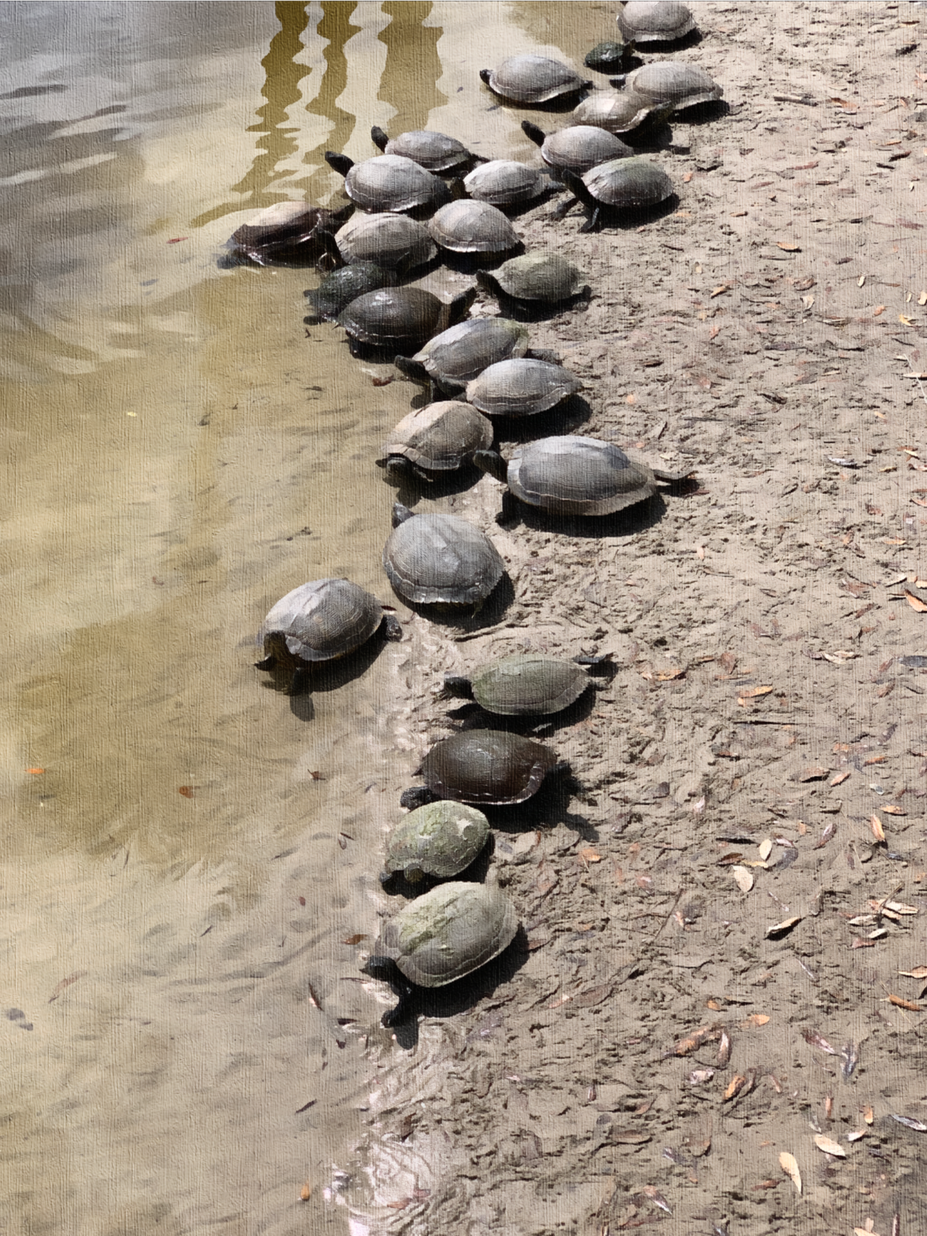 Like a herd of turtles… -