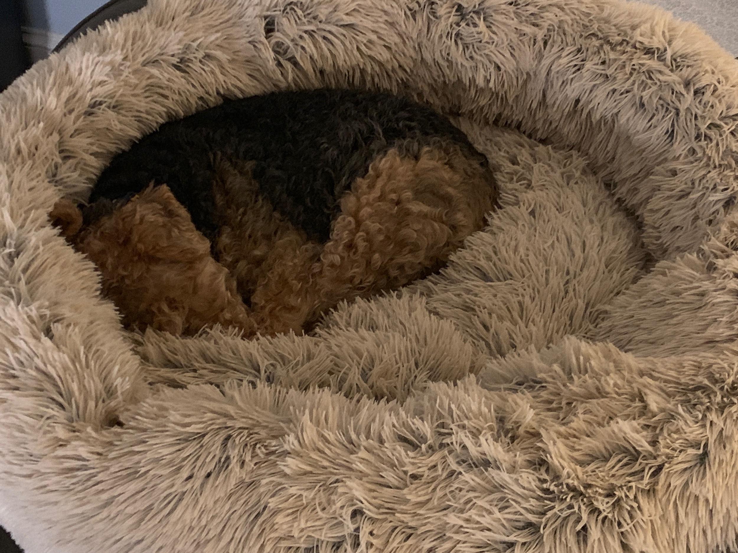 Sleeping Penny -