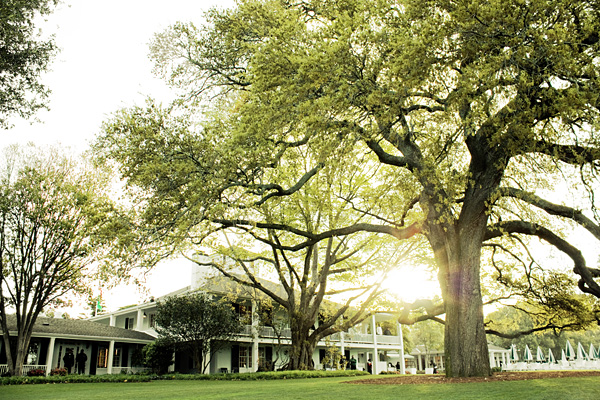 Augusta National oak tree