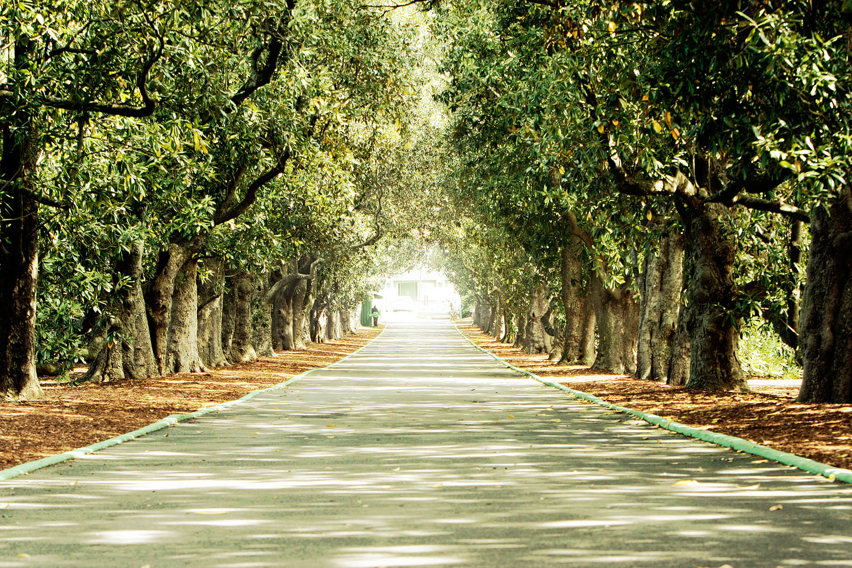 Augusta National Magnolia Lane