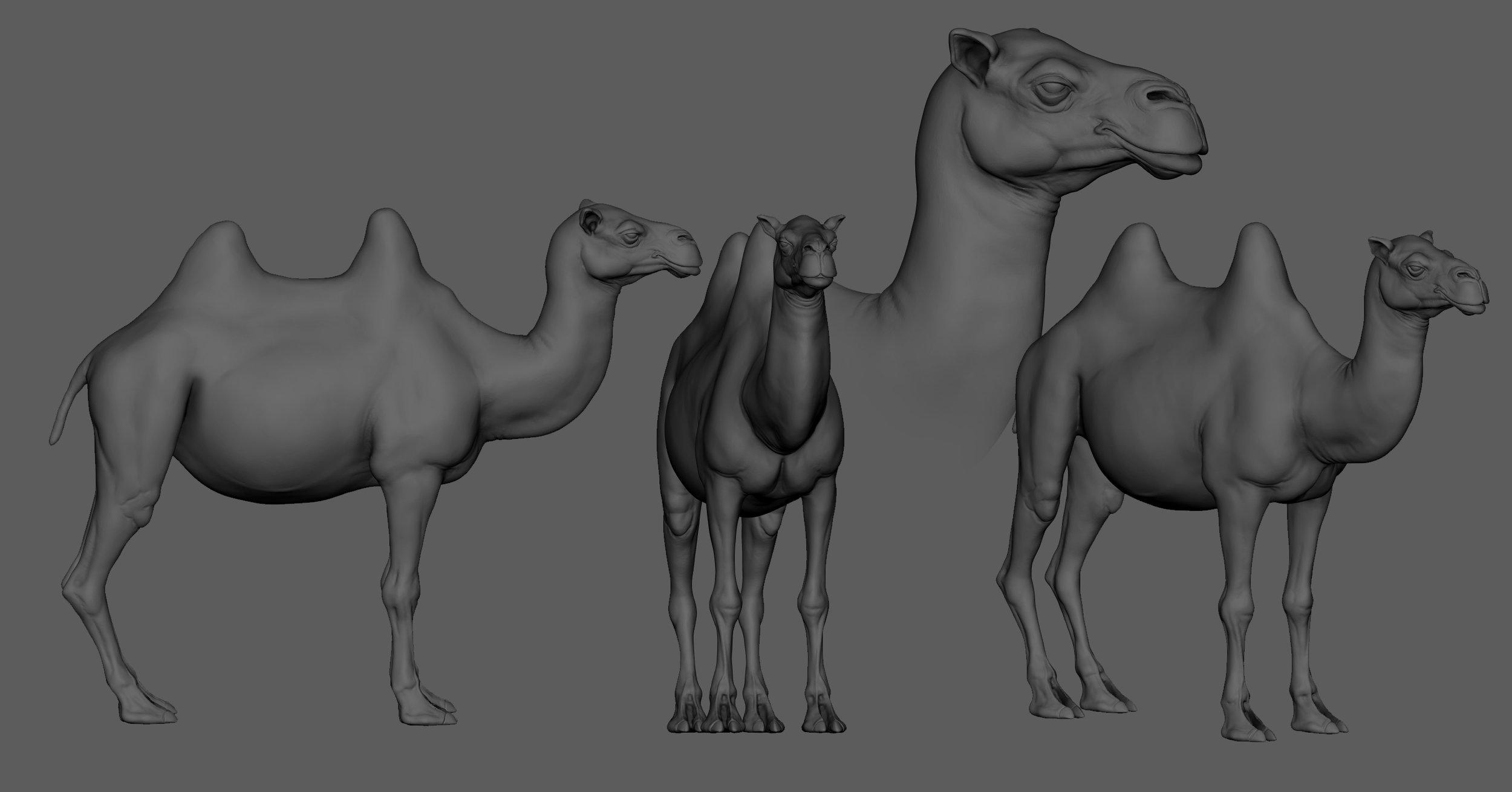 bactarian camel.jpg