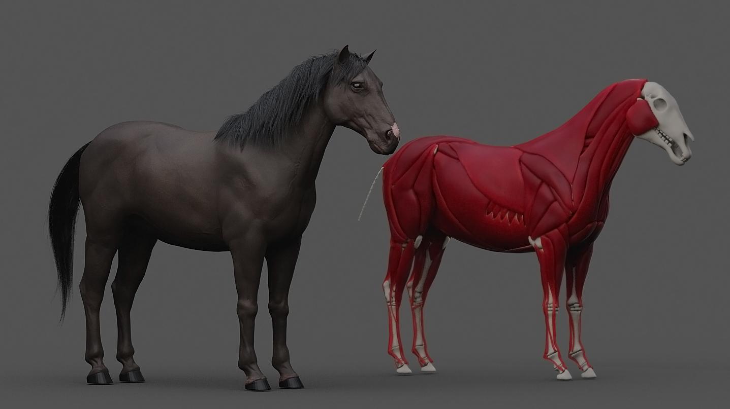 xGen_horse1.jpg