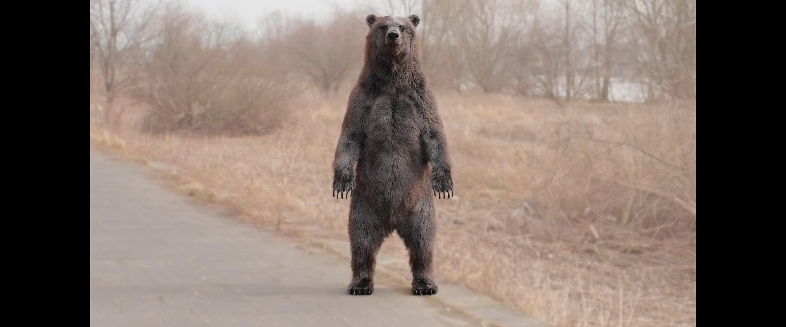 bear_medved_xgen.jpg