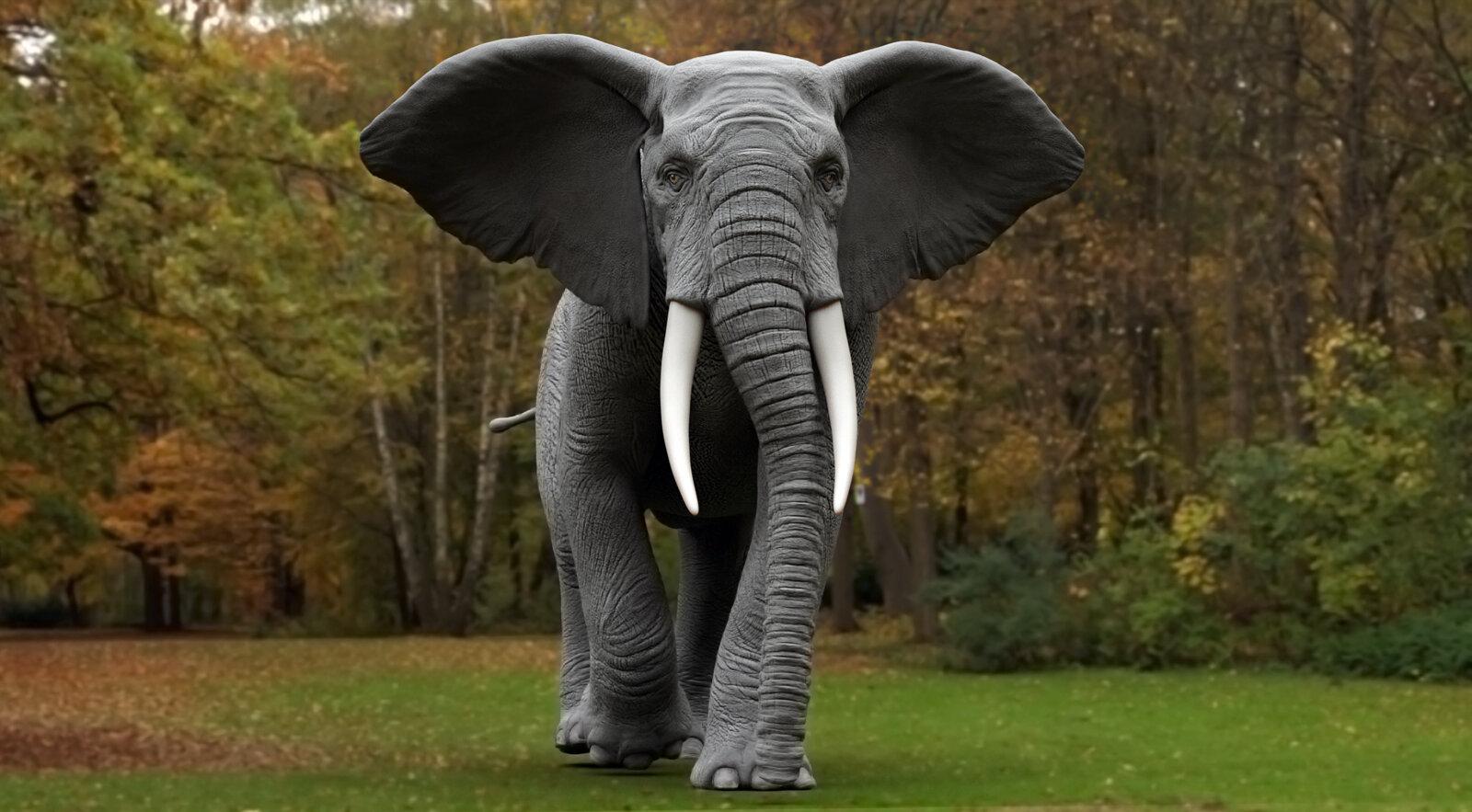 slon_elephant.jpg