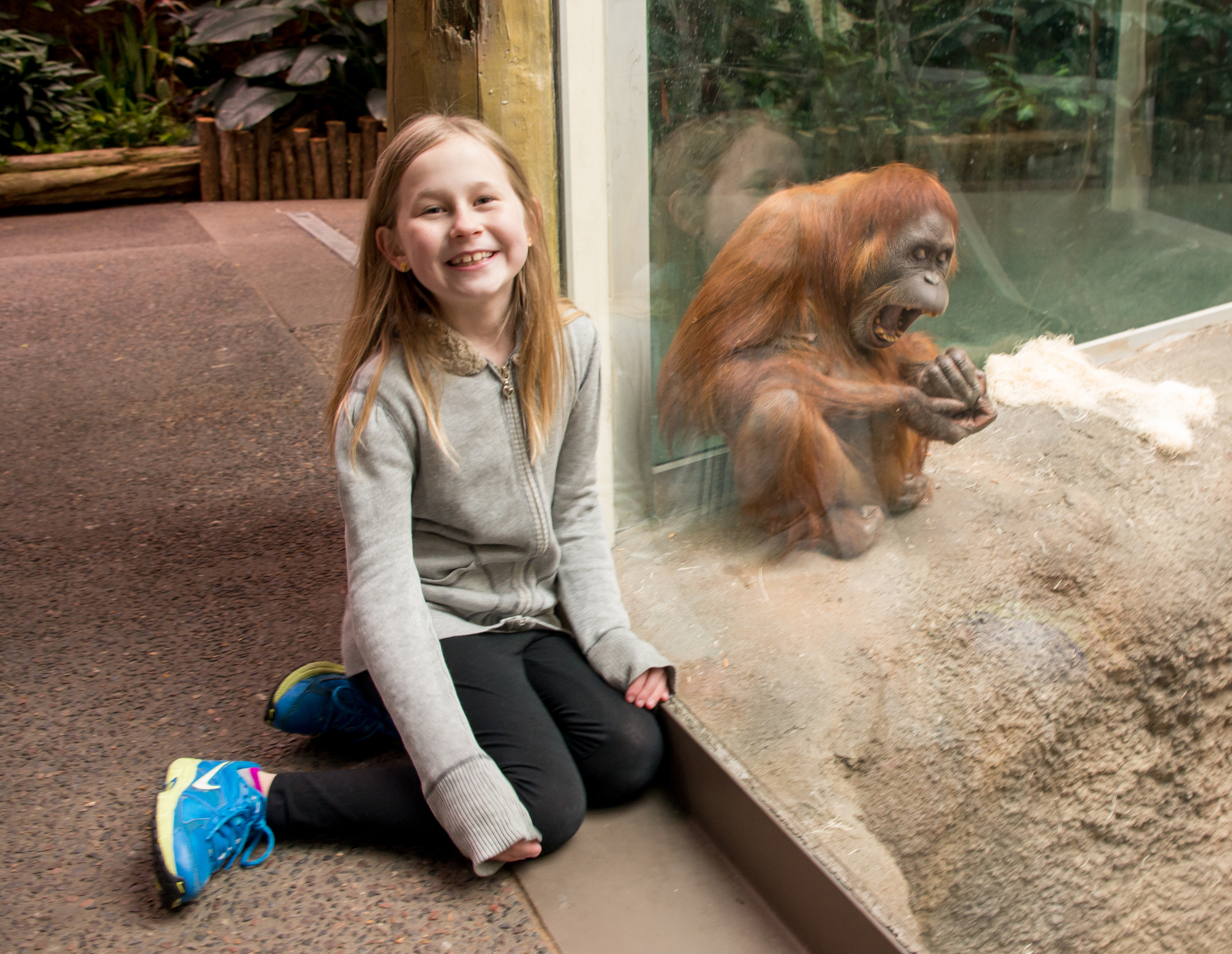Hanging with an orangutan